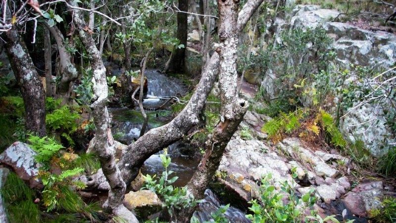 kloof_tree_water_940_wide4